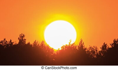 Sunset through the trees. Close-up. Free of glare insects. Time Lapse