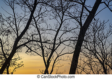 sunset through trees in winter