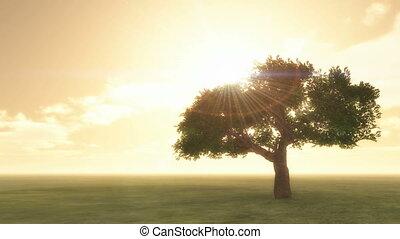 sunset tree 4k