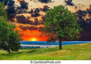 sunset tree green sky oak field landscape grass blue nature environment horizon meadow summer
