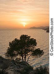 Sunset tree Mediterranean Sea, Spain