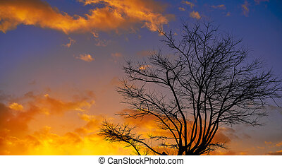 Sunset tree silhouette with orange clouds