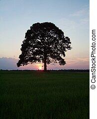 Sunset Tree