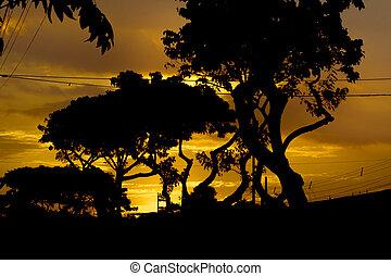 Sunset Urban Scene Guayaquil, Ecuador