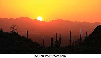 Silhouetted Saguaro in the southwest desert valley