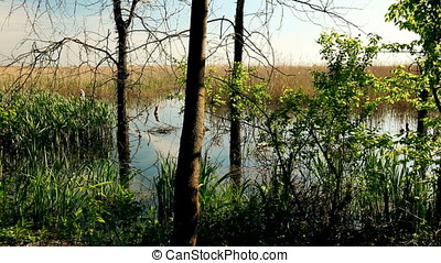 Sunset View of Marsh Forest Border - Sunset on the marsh...