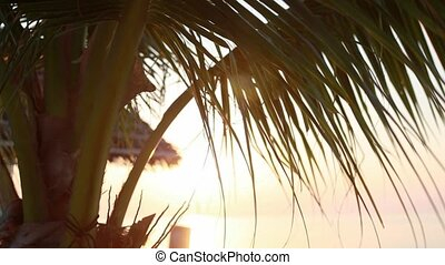 Sunset view through coconut palm tree leaf and coconuts on...