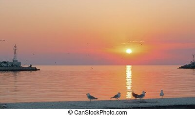 Sunset waterscape with seagulls - Slow motion shot of...