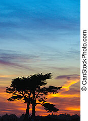 Sunset with a pair of Cypress trees sihouetted against an African sky