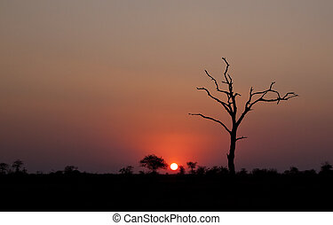 Sunset with dead tree in Africa