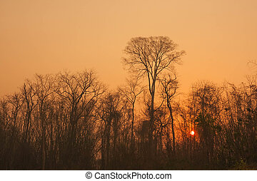 sunset with forest