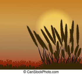 Sunset with grass flower in nature