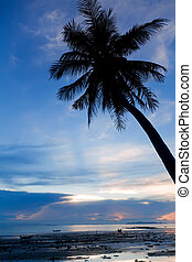 Sunset with palm tree silhouette