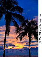 Sunset with palm trees at the beach