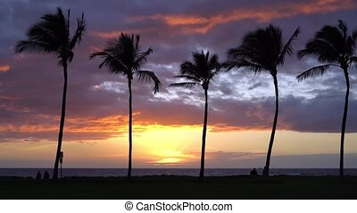 Sunset with Palm Trees in Hawaii - People running with...