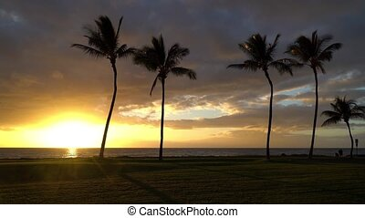 Sunset with Palm Trees in Hawaii