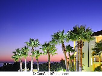 Sunset with palm trees.