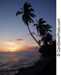 Sunset with Palms