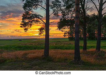 Sunset with pines in the Baltic