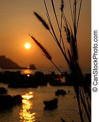 Sunset with sea oats - close up sea oats with sunset...