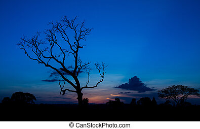 Sunset With Silhouette Of Lonely Tree