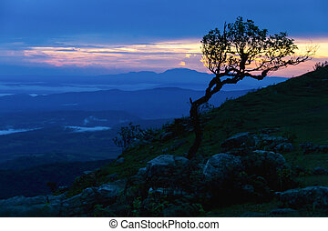 Sunset with silhouette tree on high mountain