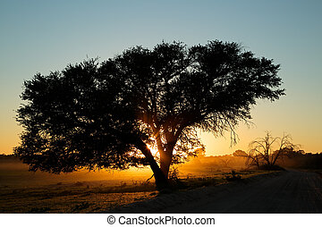 Sunset with silhouetted tree