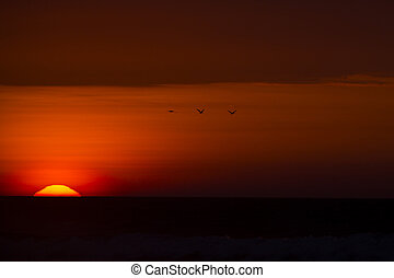 Sunset with silhouettes of birds flying in the sky in Punta Sal, Peru