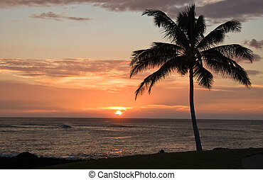 Sunset with single palm