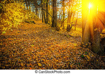 sunset with sun in autumn forest instagram stile