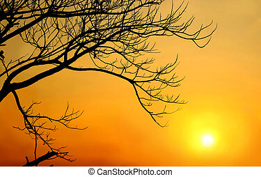 Sunset with tree stick silhouette