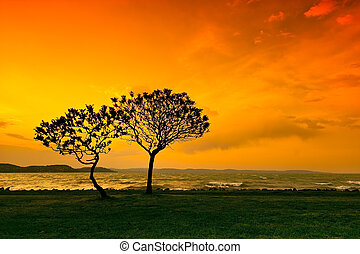 sunset with tree