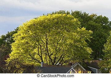 Sunshine backlighting tree