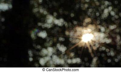 Sunshine Bokeh2