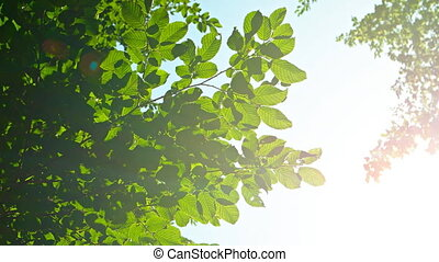 Sunshine Filtering around Tree Leaves with Bird Sounds