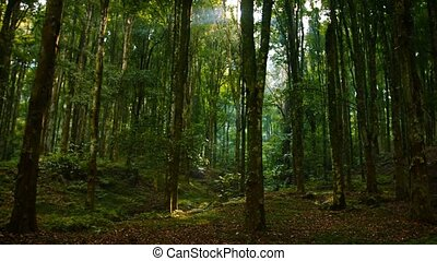 """""""Sunshine Filtering Down through Trees in a Young Tropical Forest, with Sound"""""""