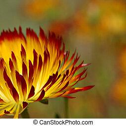 Sunshine - Flower in sunlight