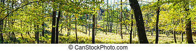 Sunshine in a green forest in the spring