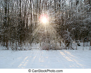Sunshine in a winter forest