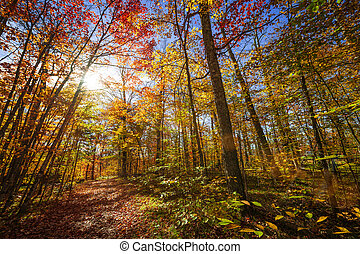 Sunshine in fall forest