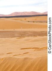sunshine in the desert of