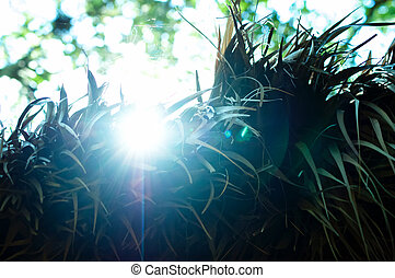 sunshine on palm fronds - sun rising above thatched roof...