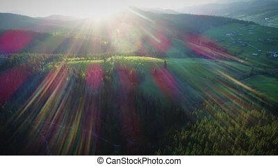 Sunshine over green forest