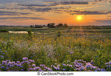 Sunshine over the flower field - Sunshine over a wild flower...