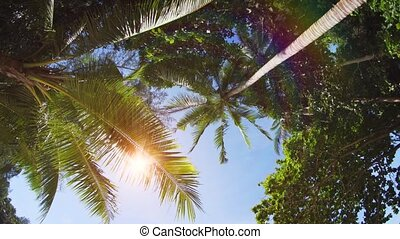 Sunshine Peeking between Palm Fronds in Thailand. FullHD...