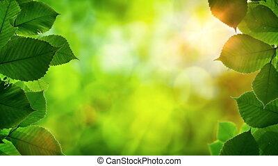 Sunshine Peeking through Tree Leaves with Bird Sounds. Video...