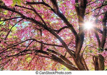 Sunshine pink blossom