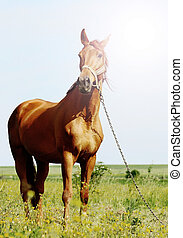 sunshine portraiit of a brown horse