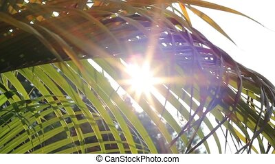 Sunshine Through Palm Leaves Slider