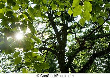 Sunshine through the leaves